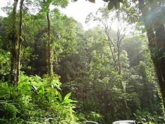 640px Tropical forest