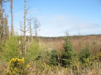 Degraded forest