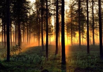 Swedishforest