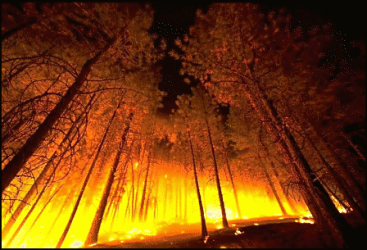 Wildfire-or-Forest-Fires-9