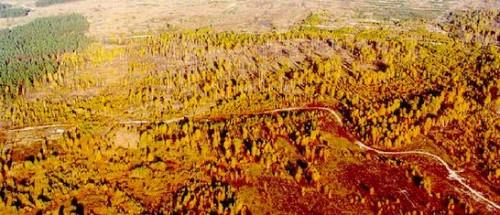 chernobyl trees