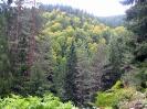 Δάσος Ελατιάς