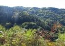 Δάσος Ελατιάς_1